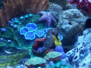 Postal: Un caballito de mar viviendo en un acuario decorado
