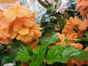Flores naranjas en una planta
