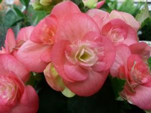 Unas flores rosas en sus plantas