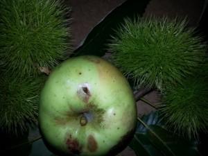 Postal: Manzana verde con un agujero de gusano