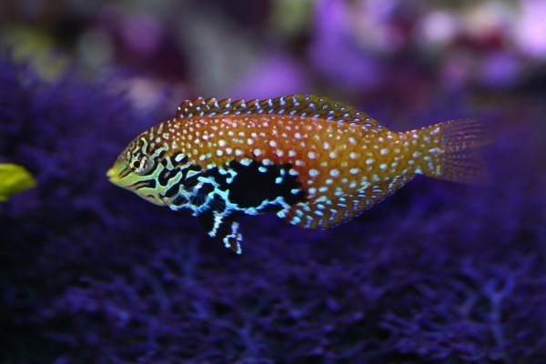 Un bonito pez tropical