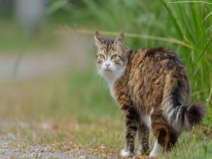 Postal: Un gato mira atrás