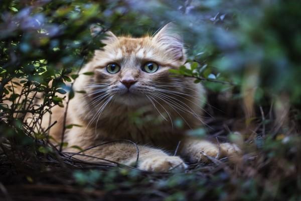 Un gato entre las ramas y la hierba
