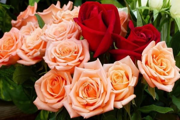 Ramo de rosas naranjas y rojas