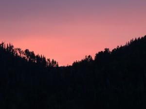 Postal: Un hermoso atardecer colo rosado sobre los árboles