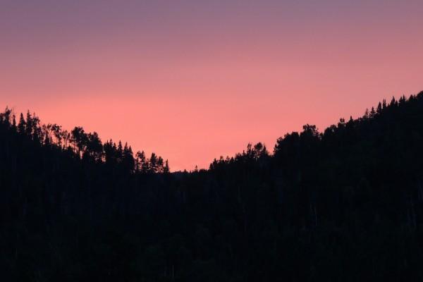Un hermoso atardecer colo rosado sobre los árboles