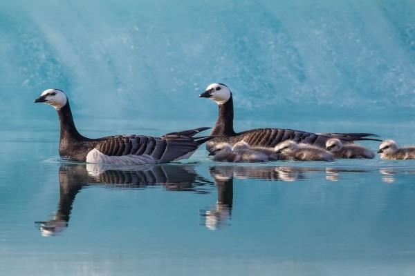 Una bella familia de patos nadando en una laguna