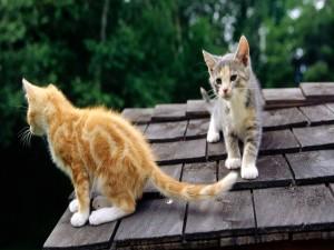 Postal: Dos gatos sobre un tejado