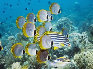 Postal: Varios peces tropicales bajo el mar