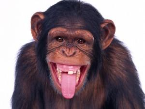 Postal: Un gracioso chimpancé