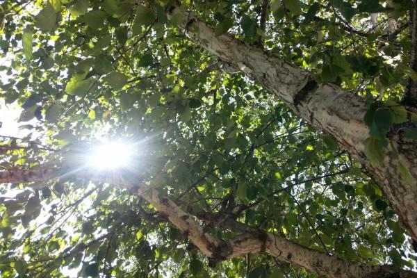 El sol a través de las ramas