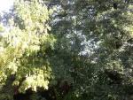 Árboles con verdes hojas