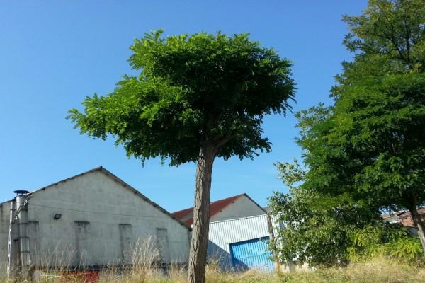 Árboles detrás de una fábrica