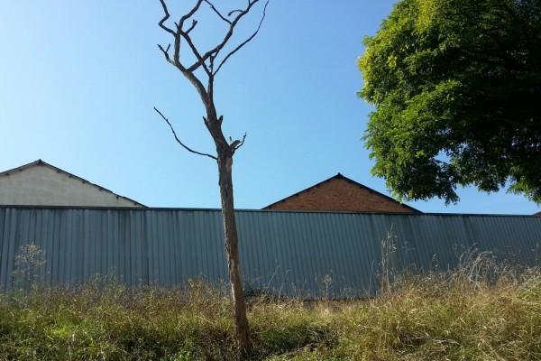 Final de la vida de un árbol
