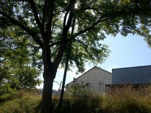 Postal: Árboles y plantas tras unos edificios