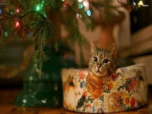 Postal: Un gato en su cesto junto al árbol de Navidad