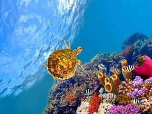 Tortuga y peces de colores
