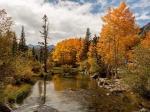 Postal: Árboles otoñales junto a un arroyo