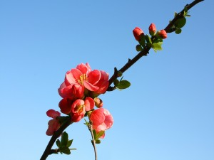 Postal: Flores rojas en una rama y un hermoso cielo azul