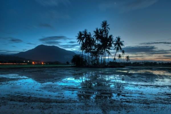 Un amanecer azul sobre las palmeras