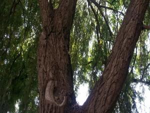 Agujero en el tronco de un árbol