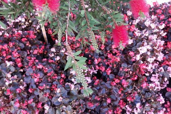 Flores en tonos rosas en un jardín