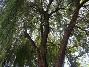 Un árbol esplendoroso