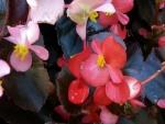 Pequeñas flores rosas en la planta