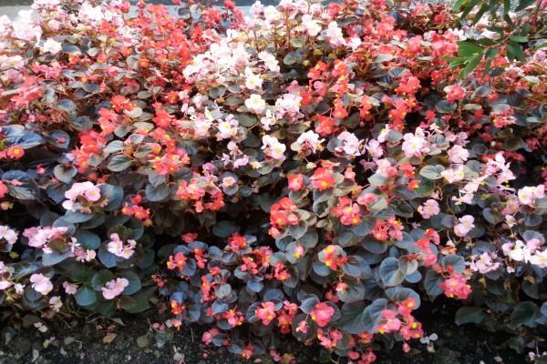 Plantas con flores en dos colores
