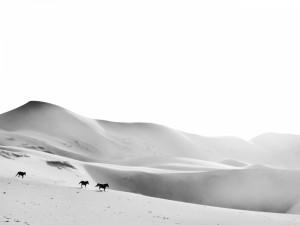 Caballos corriendo por las dunas