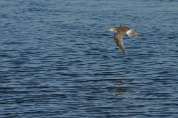 Un ave de pico largo volando sobre el agua