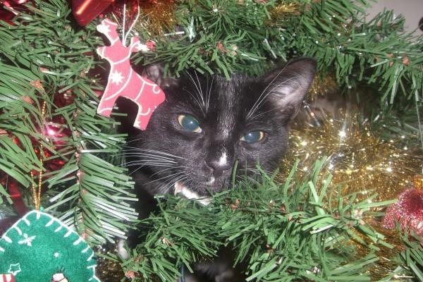 Gato escondido en el árbol de Navidad