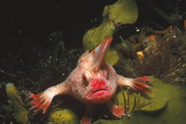 Un extraño pez en aguas de Tasmania