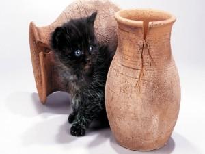 Un gatito negro entre dos jarrones