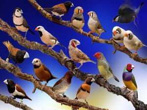 Postal: Variedad de pájaros posados en las ramas