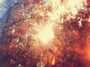 Postal: El sol entre árboles con hojas otoñales
