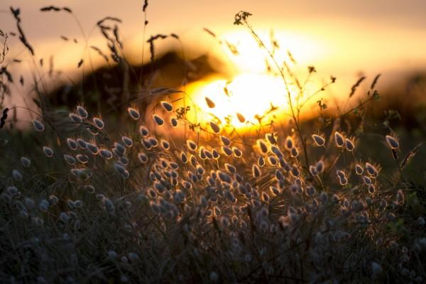 Plantas silvestres iluminadas al atardecer