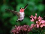 Un colibrí con las alas extendidas