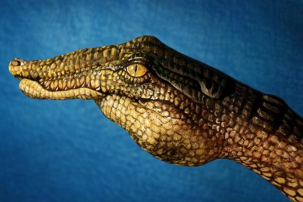 Una mano cocodrilo