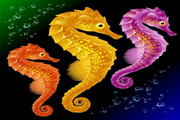 Tras caballitos de mar de distinto color