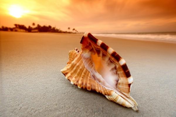 Una hermosa caracola en una playa
