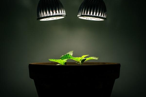 Una planta de menta que crece con luz artificial