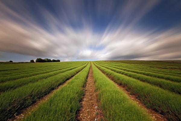 Campo verde bajo un cielo con nubes