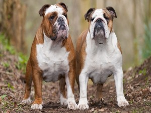 Dos adorables perros