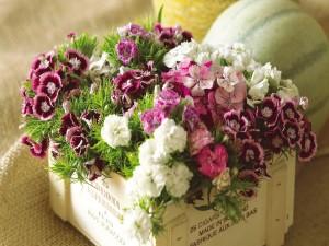 Coloridos claveles en una caja de madera