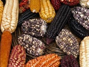 Variedad de maíz en un mercado de Perú