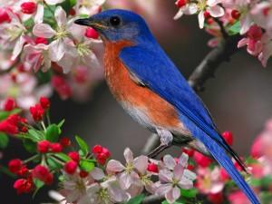 Un pájaro con plumas de color azul en un árbol en flor