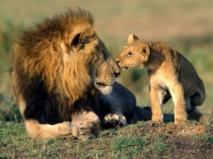 Cachorro besando a un gran león