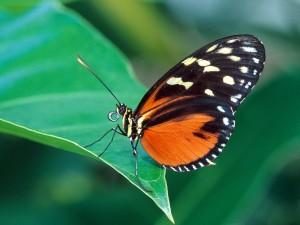 Postal: Una mariposa posada en una hoja verde