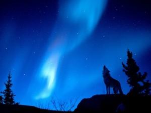 Aullido en la noche